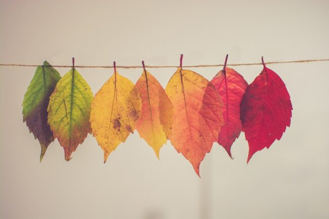 trusting the process quotes - a picture of the phases of the color of leaves through the seasons.