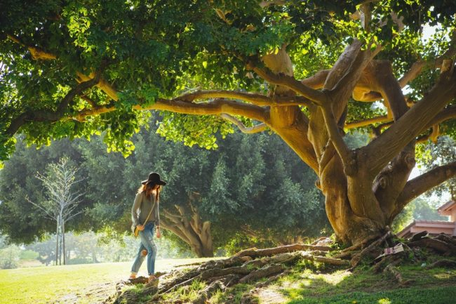 The Divine Feminine - A woman in nature walking by a beautiful tree.